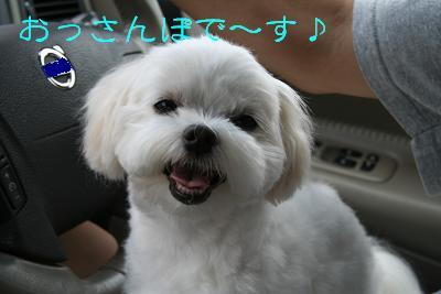 IMG_4075四葉1おさんぽ