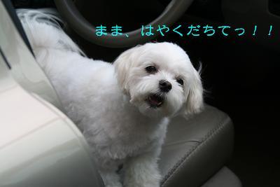IMG_3992四葉1