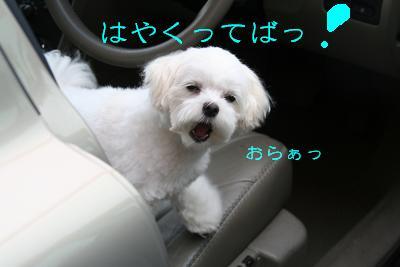IMG_3986四葉2