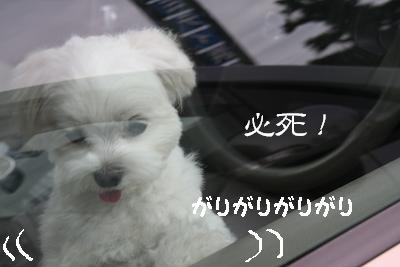 IMG_4005四葉4