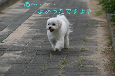 IMG_4013四葉5