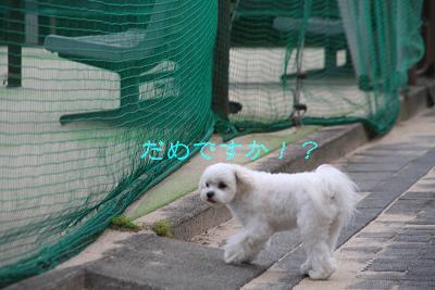 IMG_4012四葉6