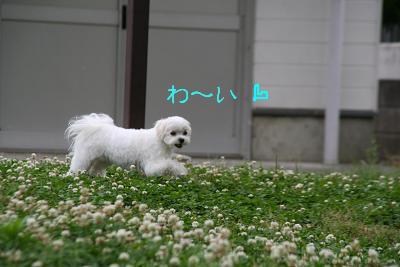 IMG_4050四葉7