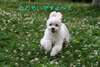IMG_4051四葉8