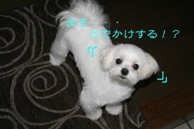 IMG_4104ひま4