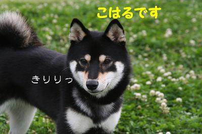 IMG_4195おひさ4