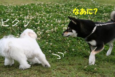 IMG_4189おひさ6