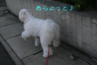 IMG_4282砂肝3