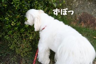 IMG_4280砂肝4
