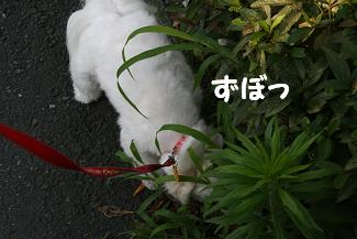 IMG_4285砂肝6