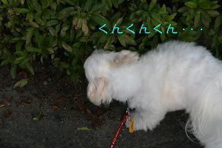 IMG_4286砂肝7