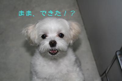 IMG_4318砂肝13