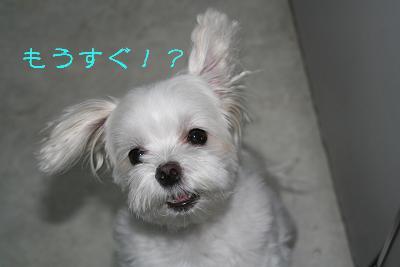 IMG_4329砂肝14