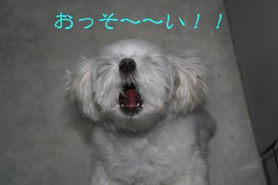 IMG_4322砂肝15