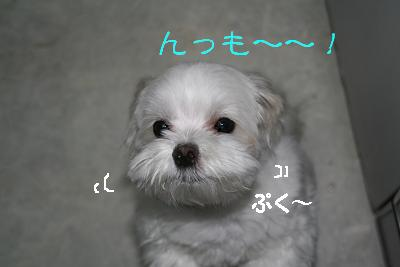 IMG_4323砂肝15