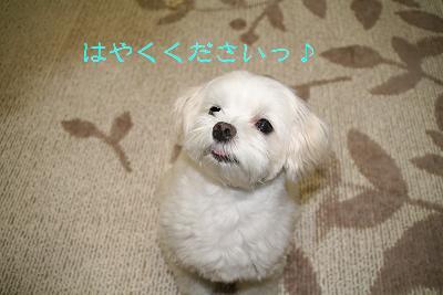 IMG_4296砂肝17