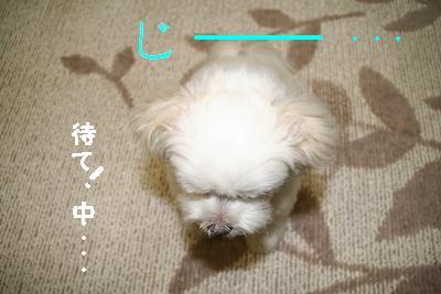 IMG_4297砂肝18