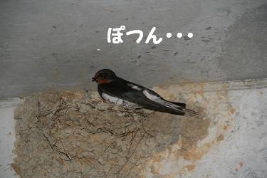 IMG_44194つばめ