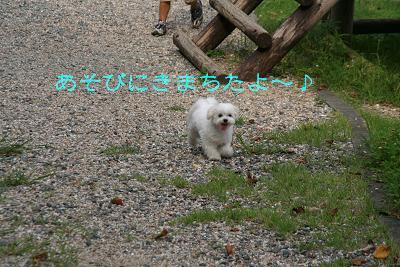 IMG_4430グリ1