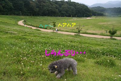 IMG_4469グリ10