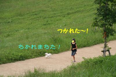 IMG_4473グリ11