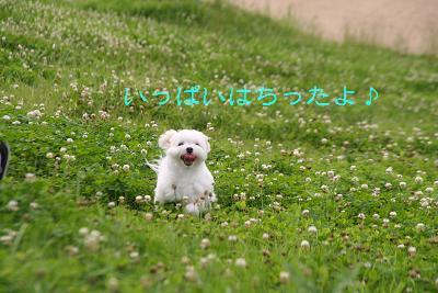 IMG_4479グリ14