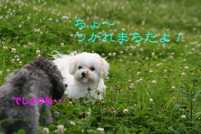 IMG_4481グリ16
