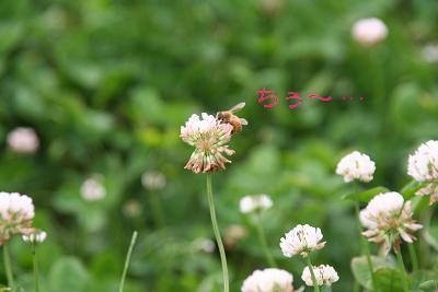 IMG_4513グリ18