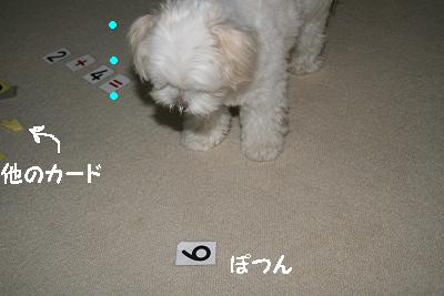 IMG_4542雨2