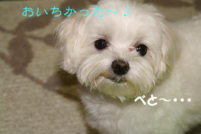 IMG_4615雨13