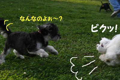 IMG_4378暑い4