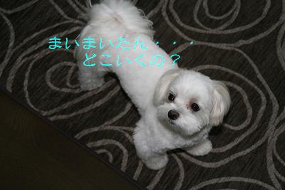 IMG_4732林間2