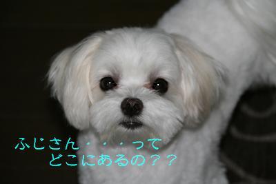 IMG_4735林間3