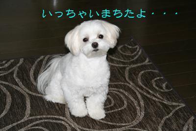 IMG_4739林間4