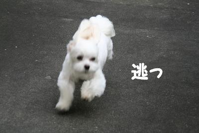 IMG_4747林間9