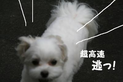 IMG_4759林間3逃