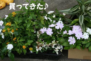 IMG_4769庭1