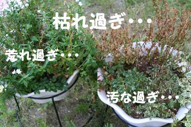 IMG_4770庭3