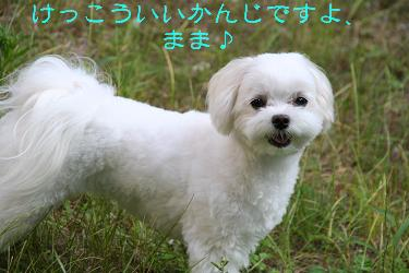 IMG_4779庭5