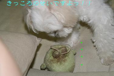 IMG_4813庭12キッコロ
