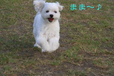 IMG_5143東京ラブ2
