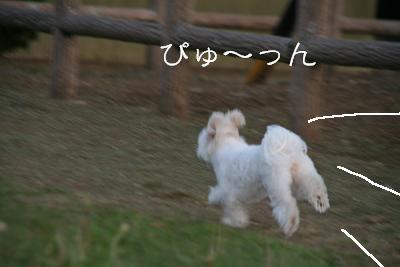 IMG_5234東京らぶ5