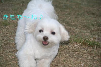 IMG_5240東京ラブ5