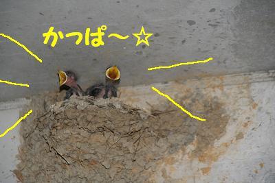 IMG_5231東京ツバメ