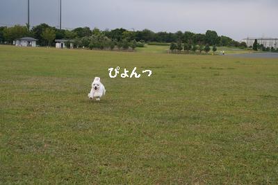 IMG_5258花はく3