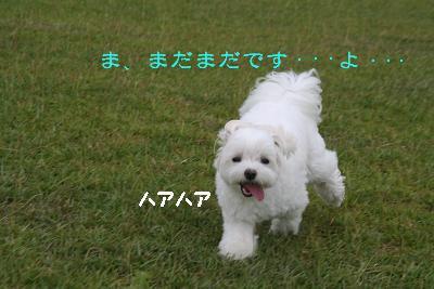 IMG_5266花はく10