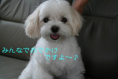 IMG_5343花火1