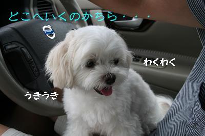 IMG_5348花火2