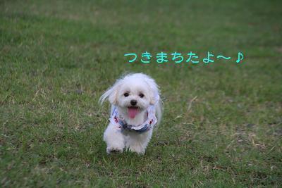 IMG_5358花火4