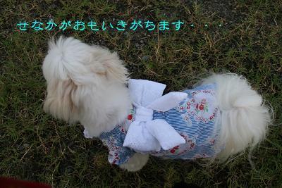 IMG_5362花火5